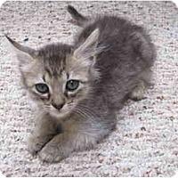 Adopt A Pet :: Alexander - Davis, CA