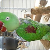 Adopt A Pet :: TURBO - Mantua, OH
