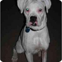 Adopt A Pet :: Una - Thomasville, GA