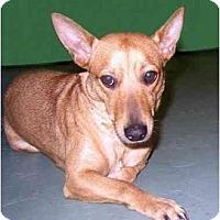 Adopt A Pet :: Kayla - New York, NY