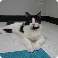 Adopt A Pet :: MAVERICK - Brea, CA