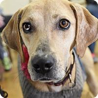Adopt A Pet :: Lana - Knoxville, TN