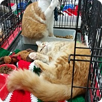 Adopt A Pet :: Peta - Harrisburg, NC