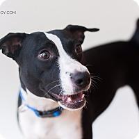 Adopt A Pet :: Dora - Homewood, AL