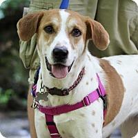 Adopt A Pet :: Addie - Cary, NC