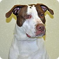 Adopt A Pet :: Marcus - Port Washington, NY