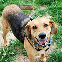 Adopt A Pet :: Buttercup - White Bluff, TN