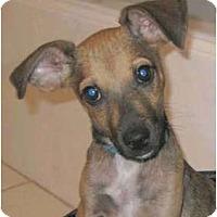 Adopt A Pet :: Benjamin - Kingwood, TX