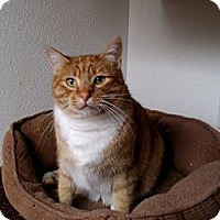 Adopt A Pet :: Metric-Foster Home Needed - Seattle, WA