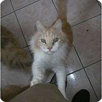 Adopt A Pet :: Candi - Los Angeles, CA