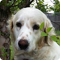 Adopt A Pet :: Rose - Denver, CO