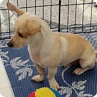 Adopt A Pet :: Walker - Phoenix, AZ