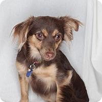 Adopt A Pet :: Lila - Santa Monica, CA