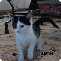 Adopt A Pet :: Jamie - Portland, OR