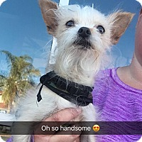 Adopt A Pet :: Timone - Rancho Cucamonga, CA