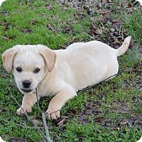Adopt A Pet :: Trapper - Westport, CT