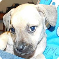 Adopt A Pet :: Laurel - Von Ormy, TX