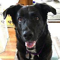 Adopt A Pet :: DAISIE - Albany, NY