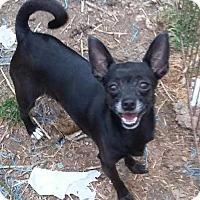 Adopt A Pet :: Luna - Carthage, NC
