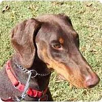 Adopt A Pet :: Sasha--adopted! - New Richmond, OH