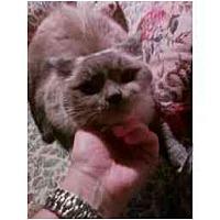 Adopt A Pet :: Kaiden - Columbus, OH