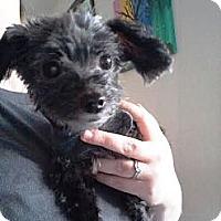 Adopt A Pet :: Tama - Puyallup, WA