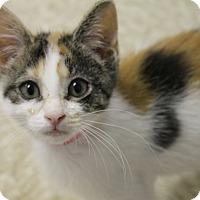 Adopt A Pet :: Powder Puff - Medina, OH