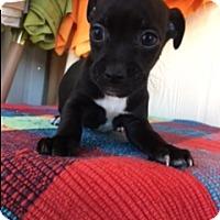 Adopt A Pet :: HOLT - Elk Grove, CA