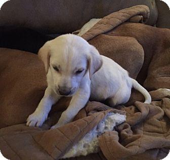 Terrier (Unknown Type, Medium) Mix Puppy for adoption in Keyport, New Jersey - Eddie