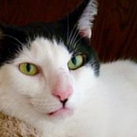 Adopt A Pet :: Toroko aka: Duncan - Amelia, OH