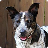 Adopt A Pet :: Elmer T Lee - Los Angeles, CA