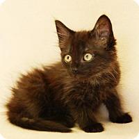 Adopt A Pet :: Chessie - Toccoa, GA