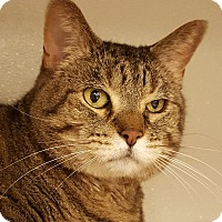 Adopt A Pet :: Hazeline - Grayslake, IL