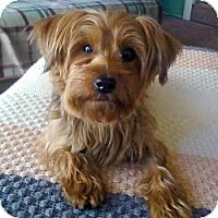 Adopt A Pet :: Tay - Crestwood, KY