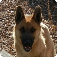 Adopt A Pet :: Rudolph ADOPTED!! - Antioch, IL