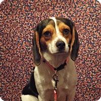 Adopt A Pet :: Jenny - Murphy, NC