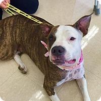 Adopt A Pet :: Miss Piggy (peter) - Homestead, FL