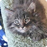 Adopt A Pet :: S'More - Davis, CA