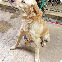 Adopt A Pet :: Ziggy - BIRMINGHAM, AL
