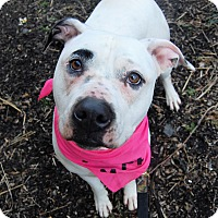 Adopt A Pet :: Chloe - Wilmington, DE