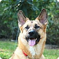 Adopt A Pet :: Jessa - Ormond Beach, FL