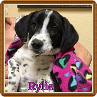 Adopt A Pet :: Rylie - Haggerstown, MD