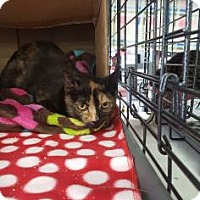 Adopt A Pet :: Tori - Baltimore, MD