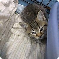 Adopt A Pet :: carmel - Henderson, KY
