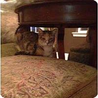 Adopt A Pet :: Mimsy - Mobile, AL