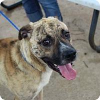 Adopt A Pet :: Judd - Acushnet, MA