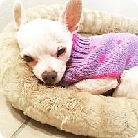 Adopt A Pet :: BonBon - Huntington Beach, CA
