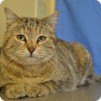 Adopt A Pet :: Joy - Larned, KS