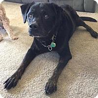 Adopt A Pet :: Kasey - Sinking Spring, PA