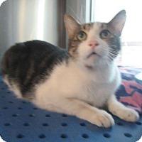 Adopt A Pet :: Sammy - North Richland Hills, TX